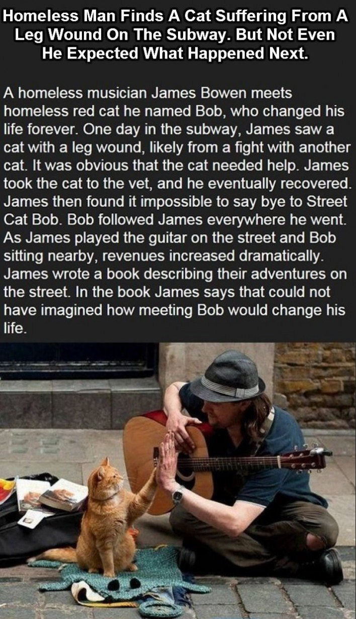 This cat changed the life of this homeless musician