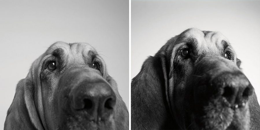 dog pictures