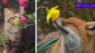 Animal sniffing flowers