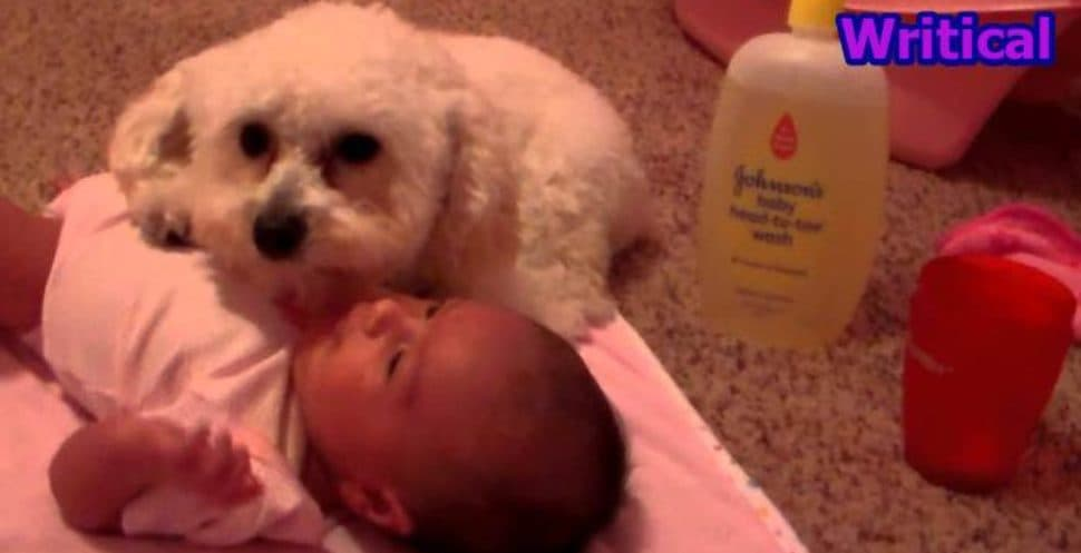 pup protecting a baby