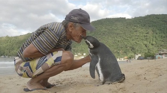 Annual Visit by a penguin