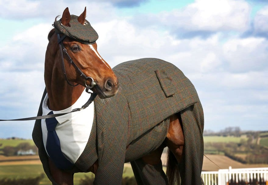 Tailored suit for horse