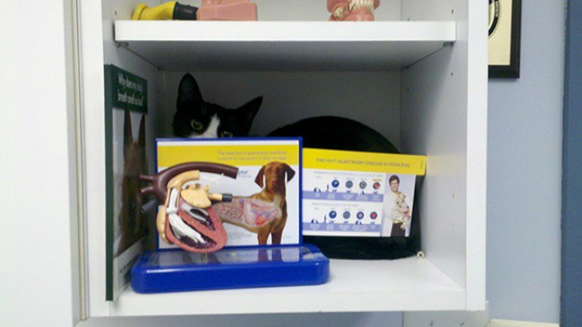 hiding places for cat