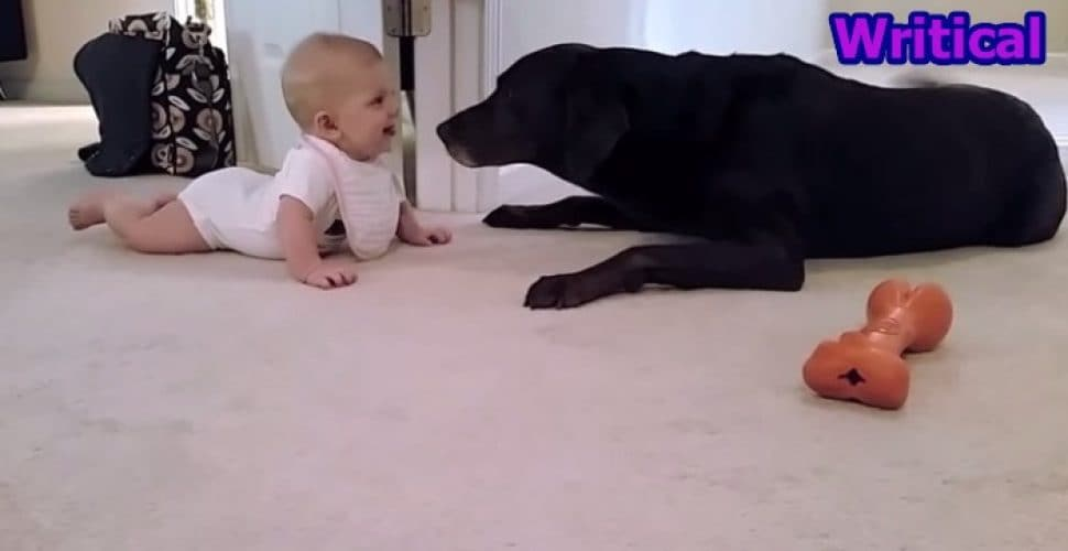 baby's first crawl