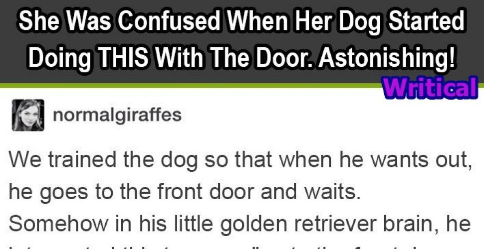 Confused Owner and her Dog's weird Behaviour