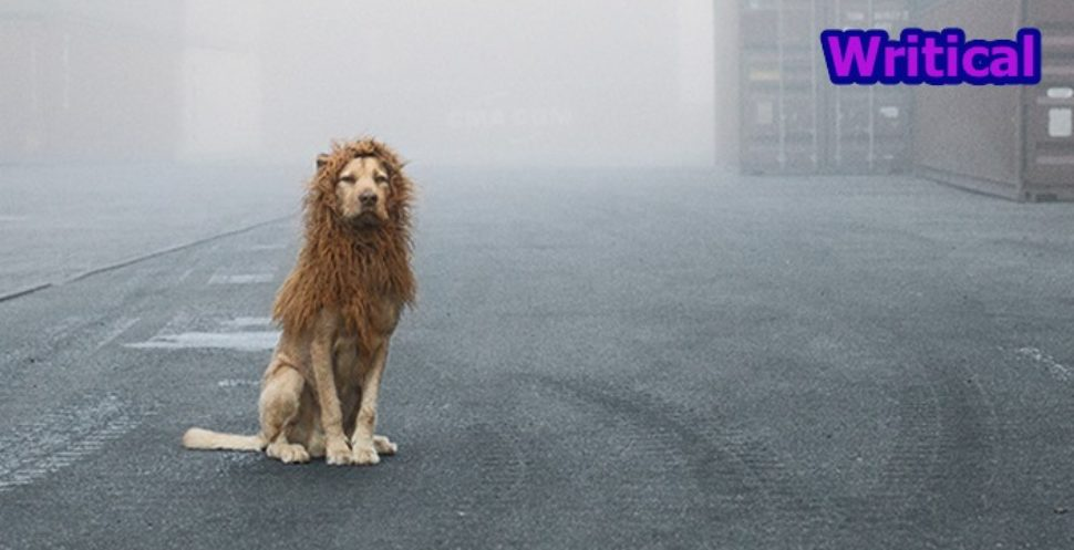 Homeless dog turns into an urban lion
