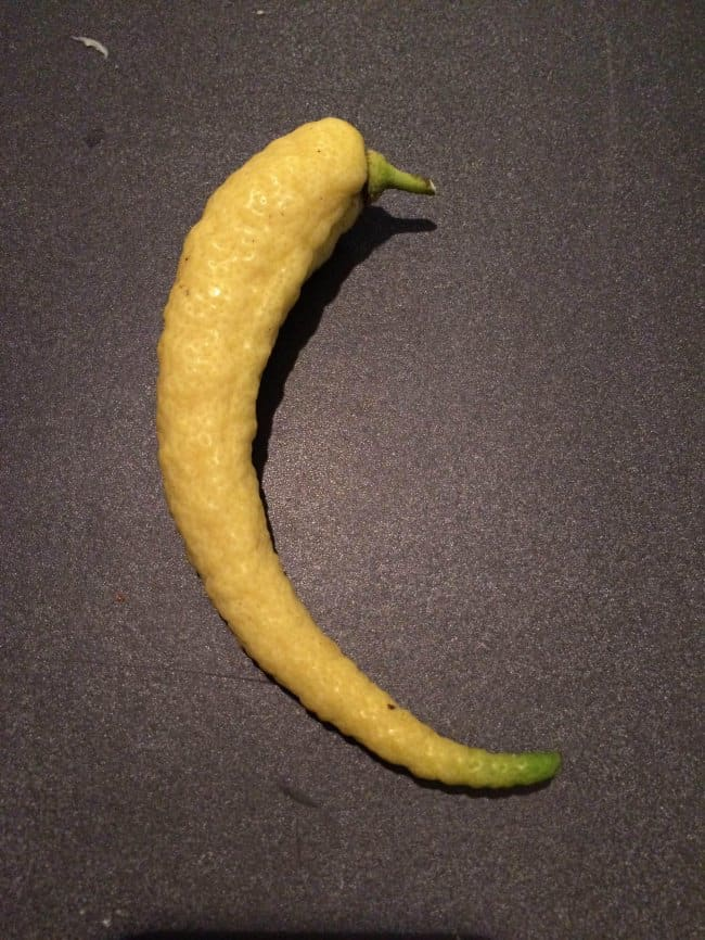 20 weirdly shaped fruits and vegetables that are confusing
