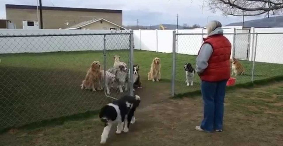 16 dogs were eagerly waiting for their roll call, but one of them did this