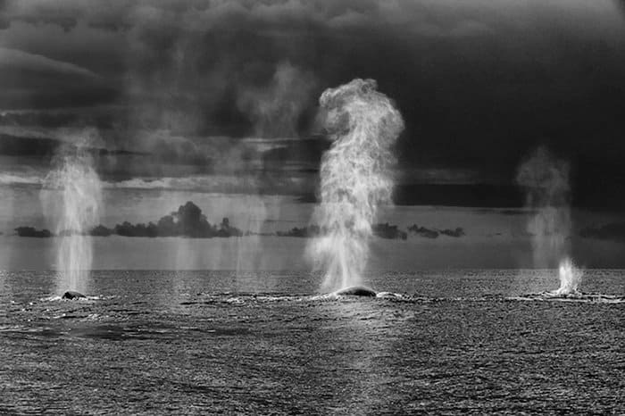Majestic photographs of whales and dolphin captured by Christopher Swann