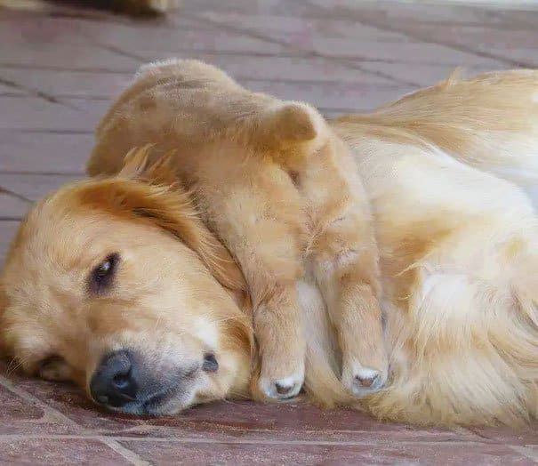 Animal Expressions that sums up what it is like to be a mother