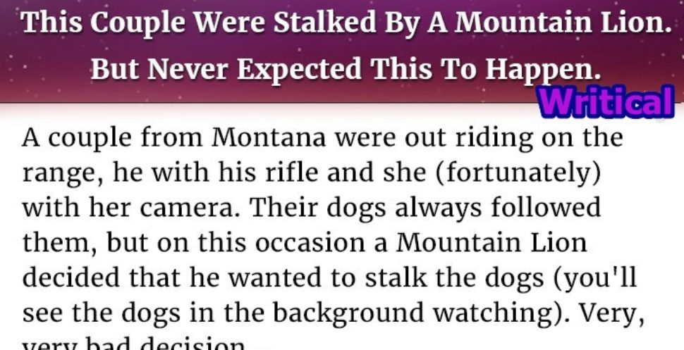 Mountain lion stalked this couple, but they never expected this