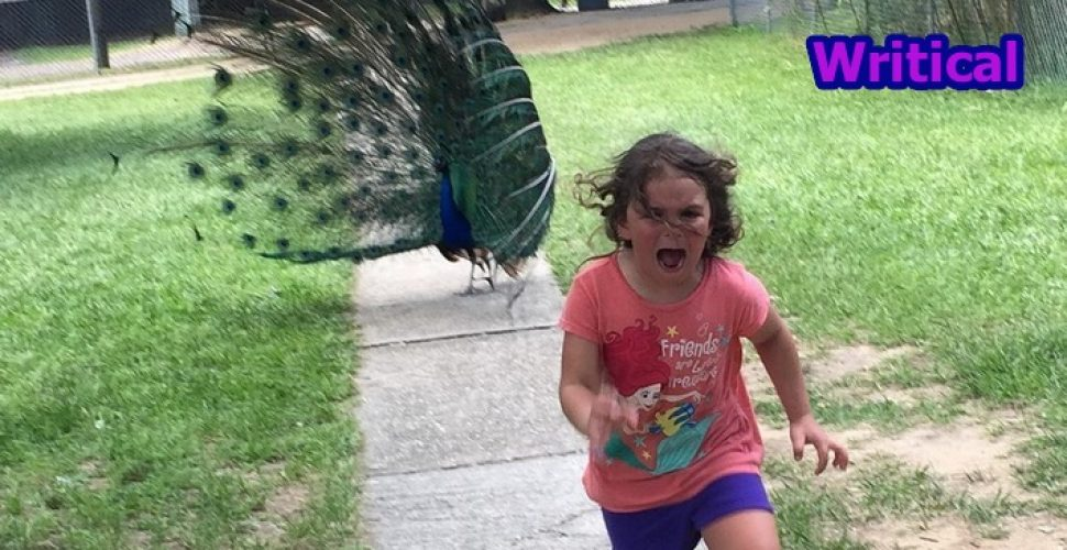 Family Zoo Trip didn't go as planned, but then Internet did this