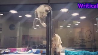 Cat escapes pet house display to meet up with beloved friend