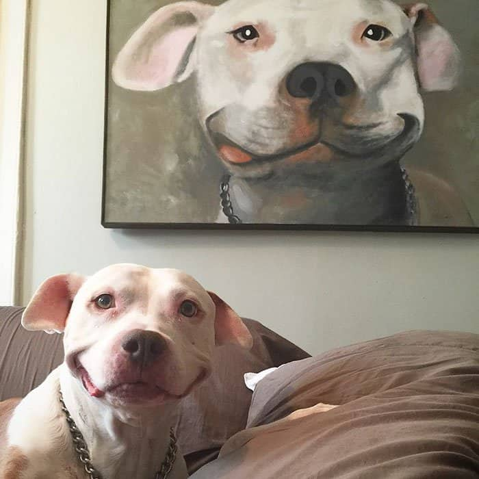 Brinks Pit Bull's smiling pictures. Awesome