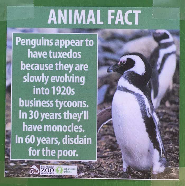 Fake Animal Facts All Over LA Zoo!