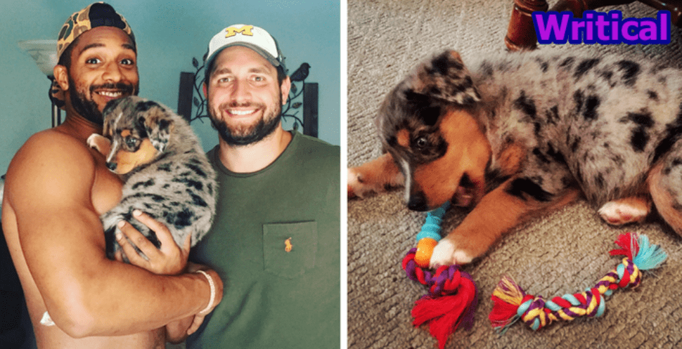Couple Adopts Dog Because They Can't Have Kids