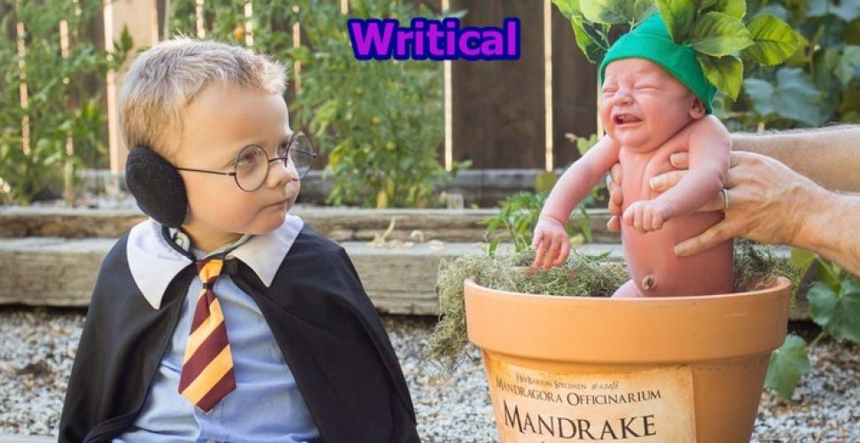 Exclusive Harry Potter themed Mandrake Baby pictures