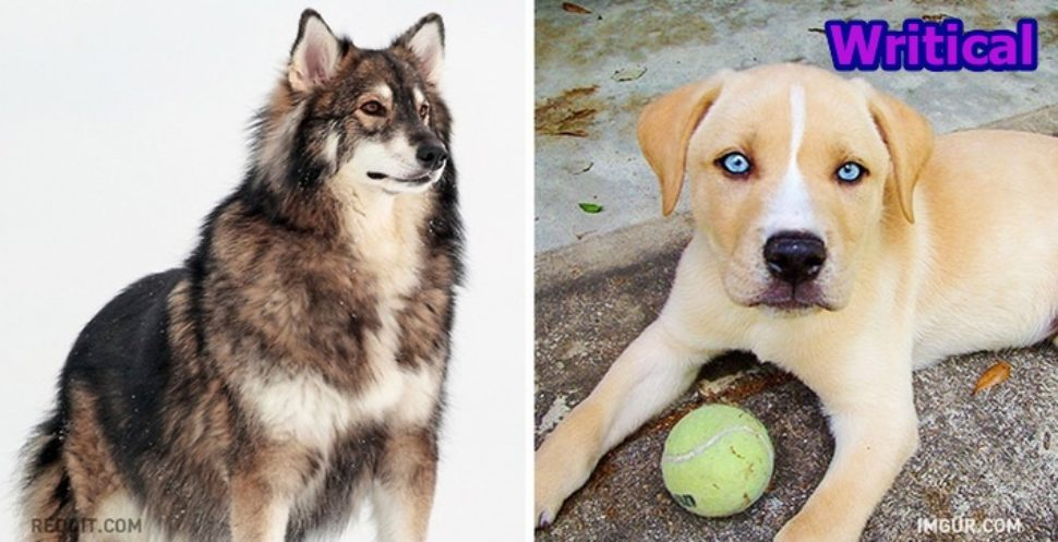 Unbelievable and Unreal Looking Dog Breeds.