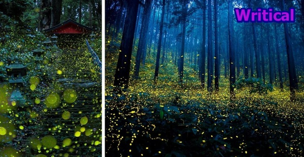 Fireflies Surreal photos from Japan. Awesome
