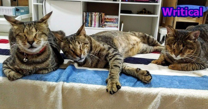Three blind cats were discarded but then found a perfect home