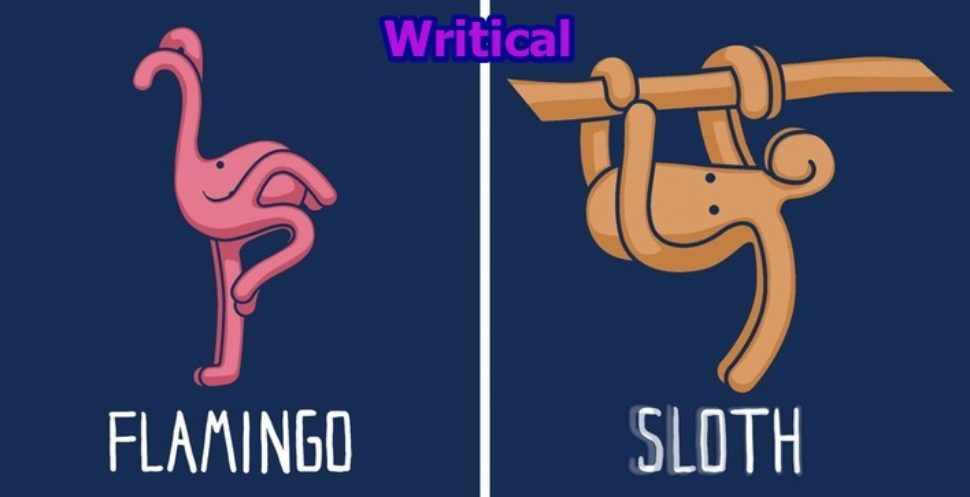 Octopus can take any other form. Check out these illustrations