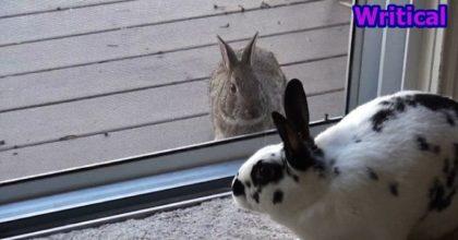 Wild bunny crushes
