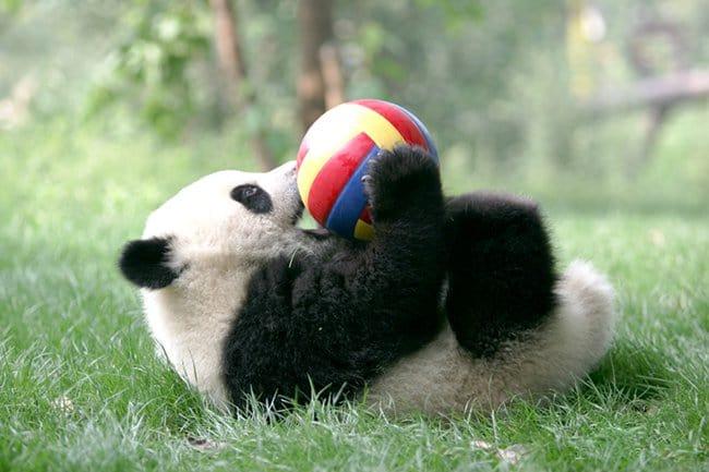 Panda daycare centre