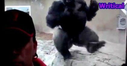 Monstrous Gorilla