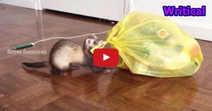 Ferret, the Trash Helper