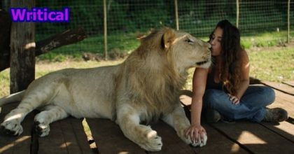 The lions treat woman as a dominant figure. Perfect