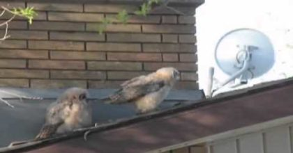Owl pranks his friend in an epic way. Hilarious