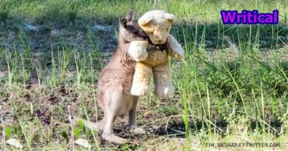 Few cutest images that will make your heart melt