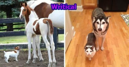 Animal Brothers that have different mother